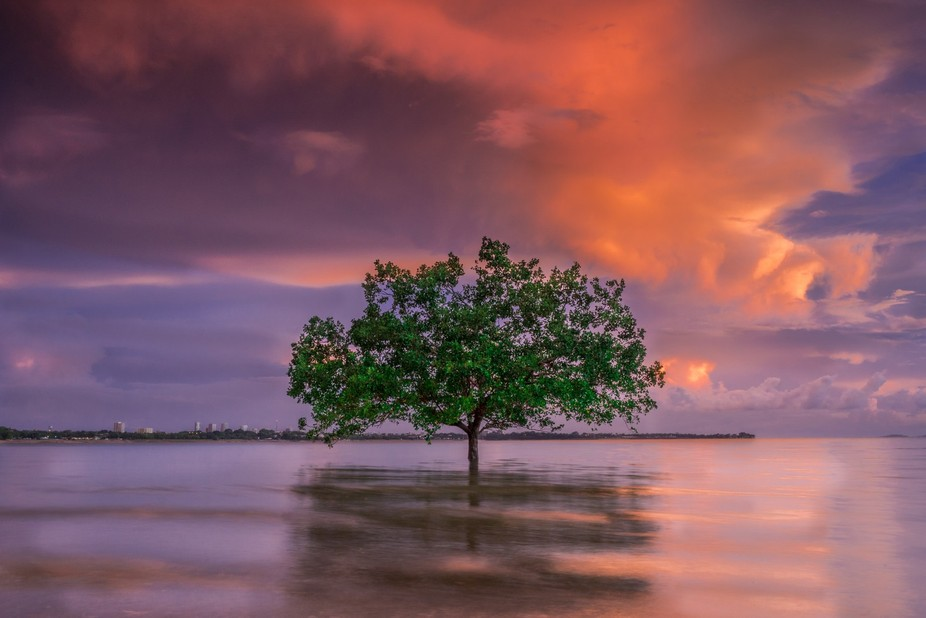 Stand alone tree standing strong during high tide between sky and sea. Darwin NT Australia.