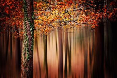 Basquecountry autumn