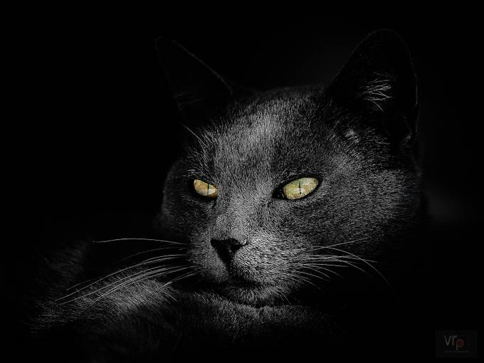 My Mate Barney by vincepope - Feline Beauty Photo Contest