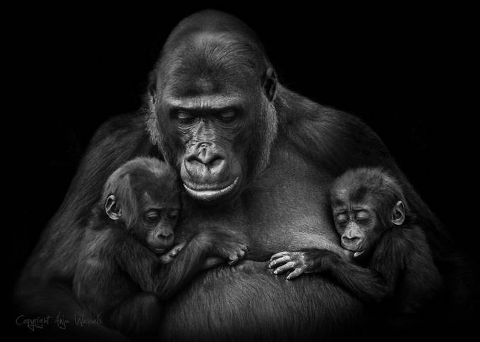 Twins by AnjaWessels - A Black And White World Photo Contest
