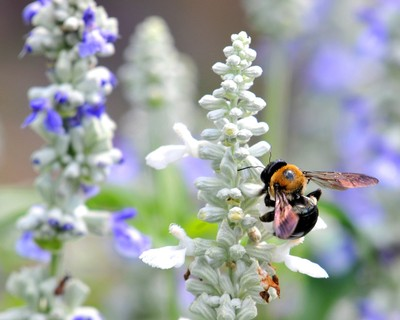 Bee w-flower1