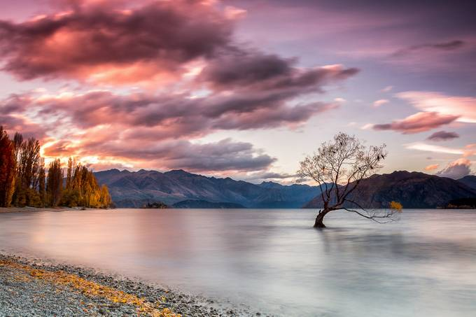 That Wanaka Tree by paulkleynhans - Bright And Colorful Photo Contest