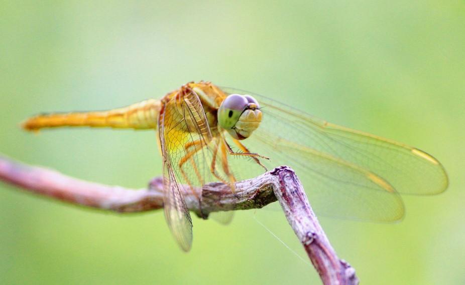 Clicked at Jaldapara Nationaal Park, Alipurduar, West Bengal, India