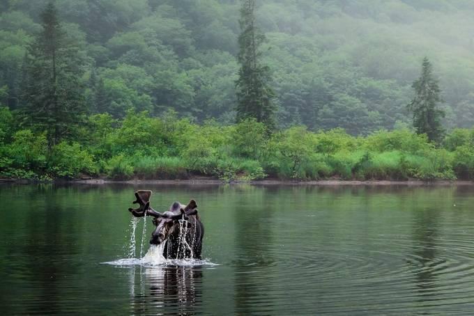 La rivière Jacques Cartier. by gaston - Celebrating Nature Photo Contest Vol 3