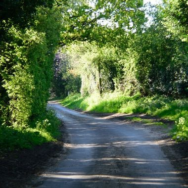 A quiet lane in Norfolk, UK on a May morning.