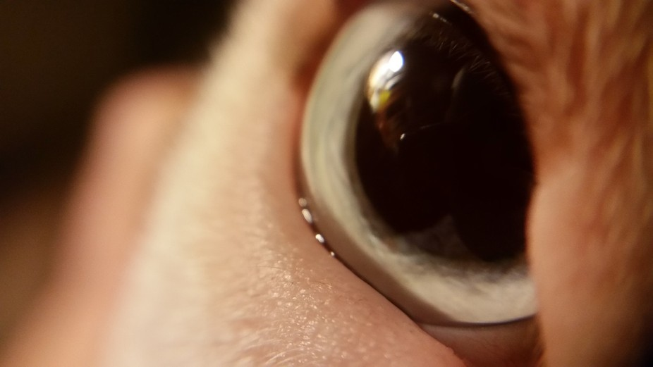 My dog's one blue eye. She is always such a good sport, to indulge my need for macro.