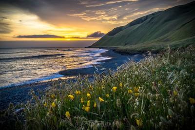 Lily sunset
