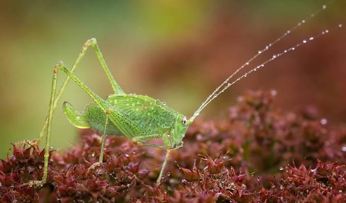 Cricket by fuzzyfelt30 - Get Wet Photo Contest