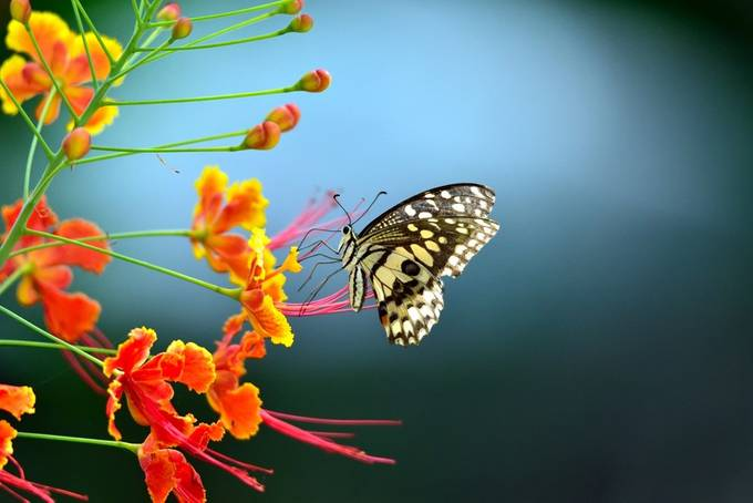 on a flower by susel - Beautiful Butterflies Photo Contest
