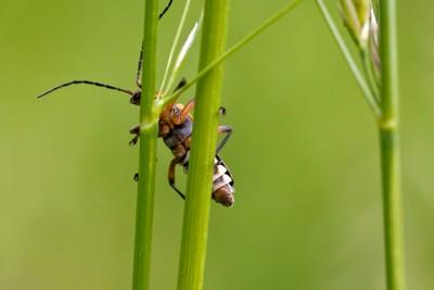 IMG_0064 Lightning Bug Peekaboo