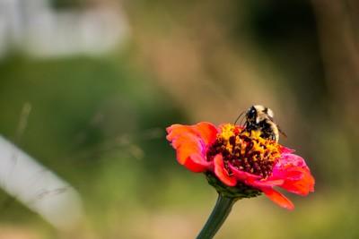 Wedding Bee