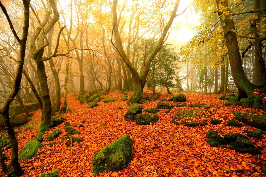 Scene from Kymin Woods taken on a misty autumn morning, Forest Of Dean, Monmouthshire