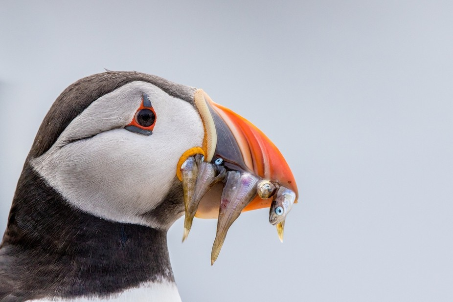 On the Farne Isles and this puffin lost its nest hole. it hung around for a while until it got it...