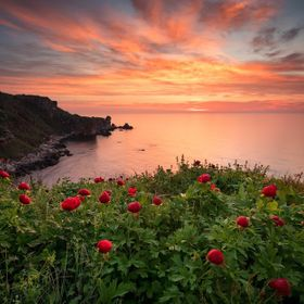 Magnificent sunrise view with beautiful wild peonies on the beach near Kavarna, Bulgaria