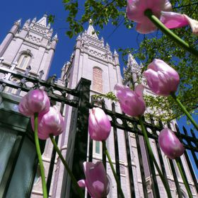Tulips all around the Salt Lake LDS Temple