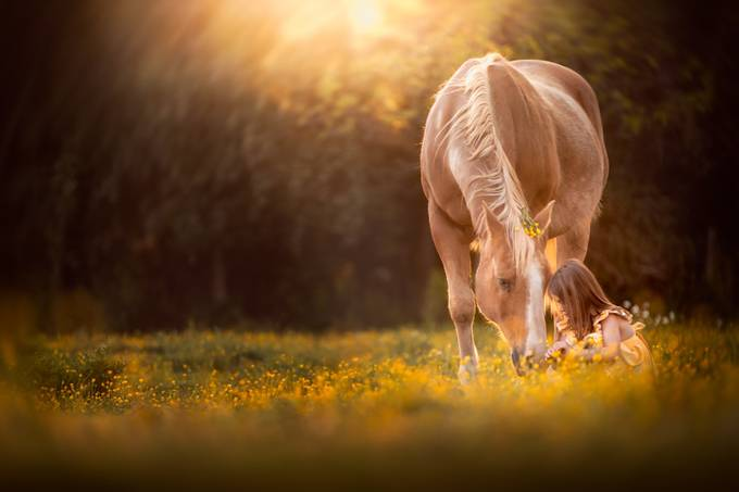flowers and friends by clareahalt - Fairytale Moments Photo Contest