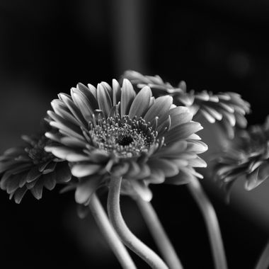 BW Flower Study