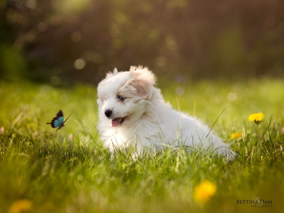 A cute little puppy and a butterfly.
