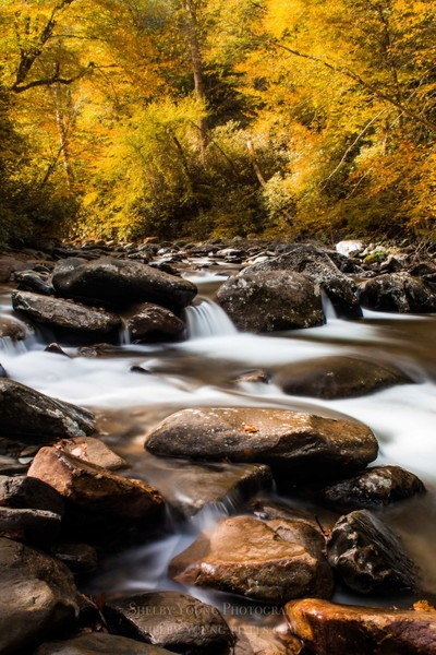 Autumn Rapids in the Smokies