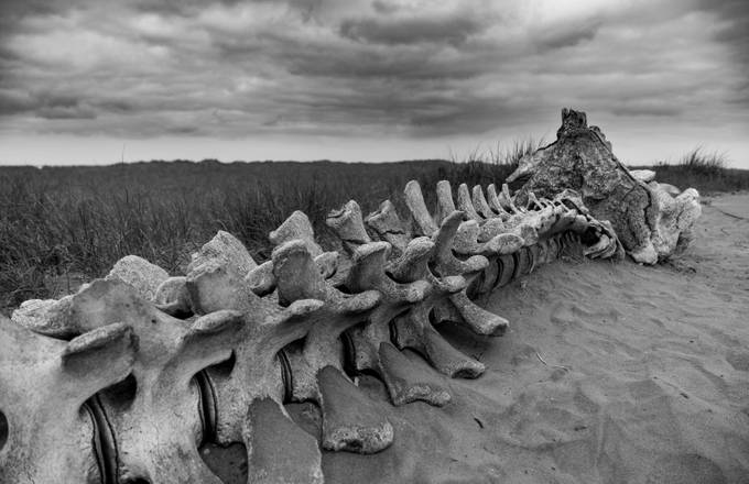 Whale Bone by MatthewLeite - Monochrome Creative Compositions Photo Contest