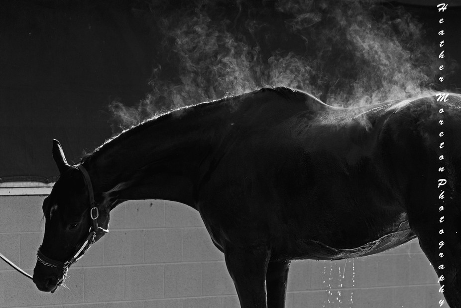 Racehorse at Churchill Downs 2016