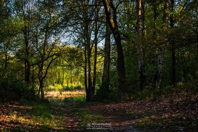 Forest Path Into The Light