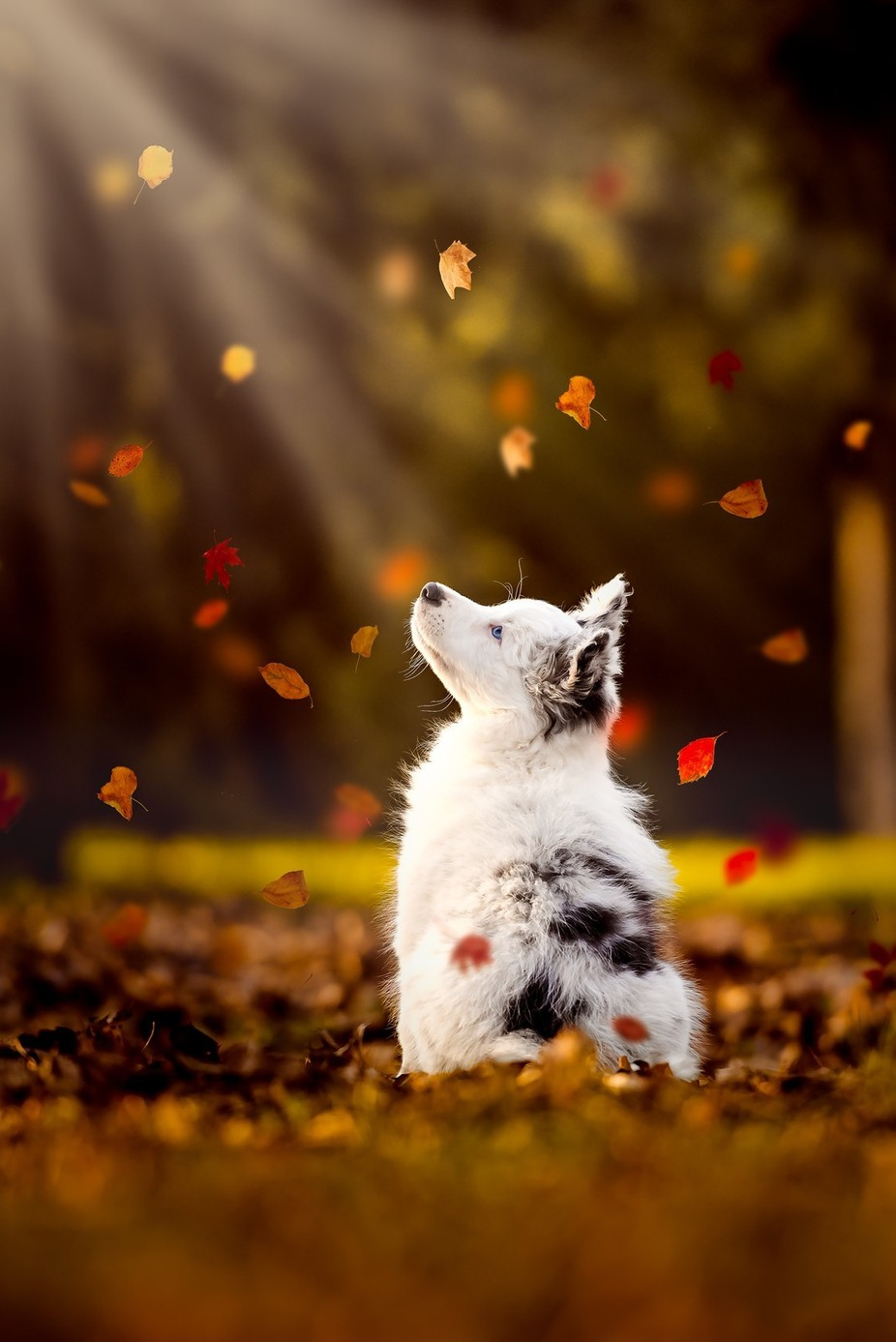 Autumn memories by ceciliazuccherato - Only Pets Photo Contest