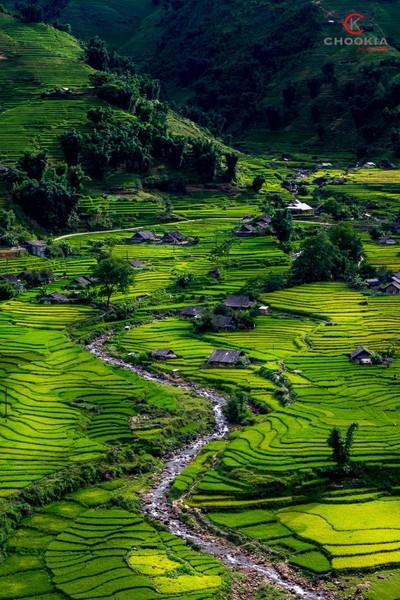 Padi Field II  SAPA,Vietnam