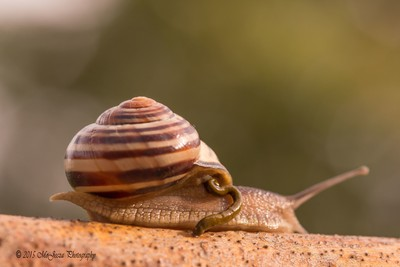Snail doing what we all do.