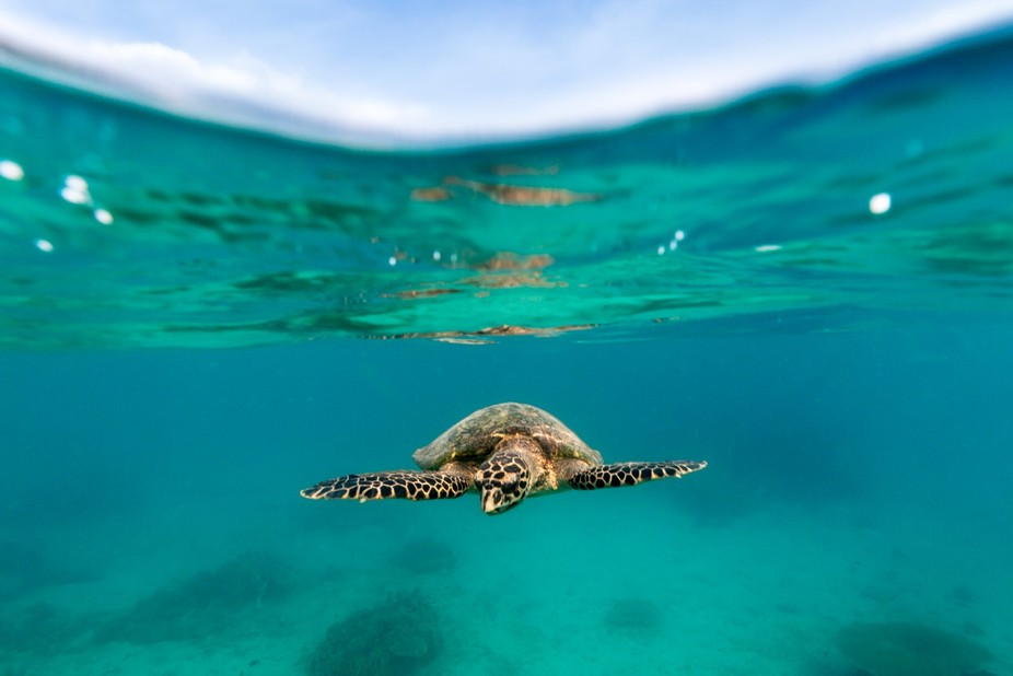 Is it a bird, is it a plane... or just a curious hawksbill joining us for a swim!