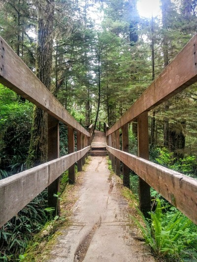 Tree Bridge at Pacific Rim Rainforest