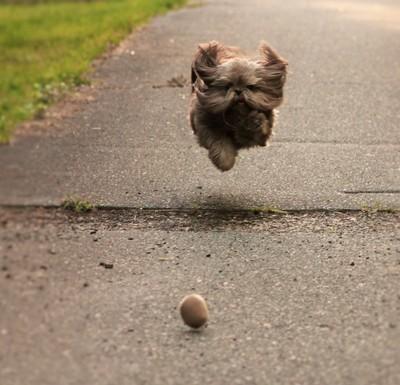 I'm Flying, Momma!!!!!!!