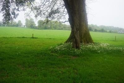 Tree & flowers