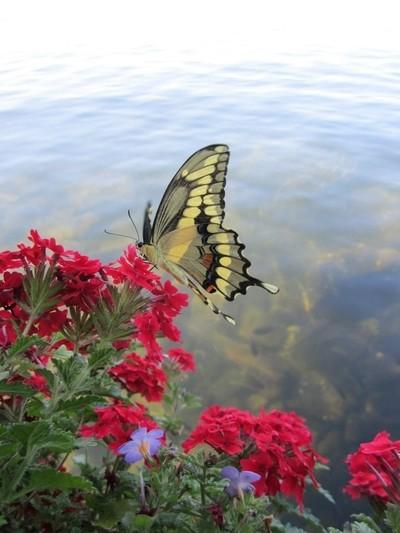 Butterfly Encounter.
