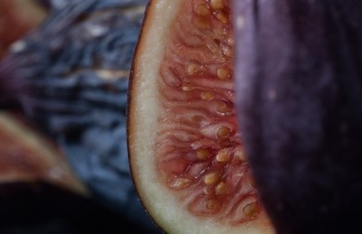 Fig: 1