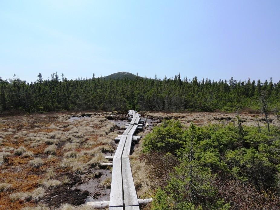 Mount Jackson Cone