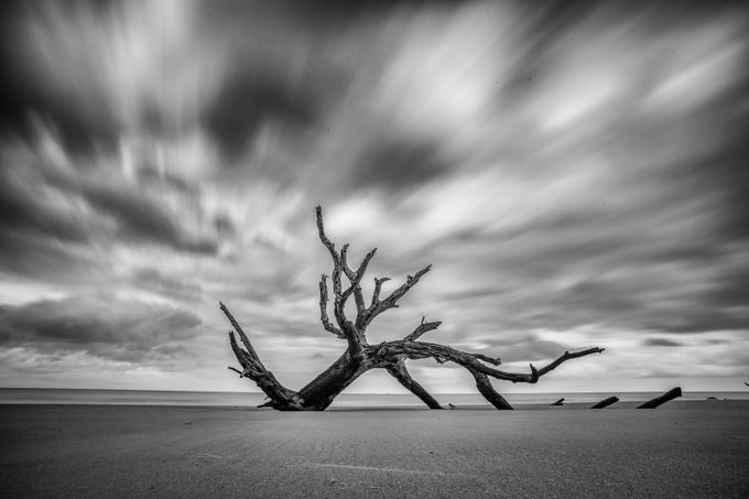 Left to die by cathos1244 - Black And White Compositions Photo Contest vol2