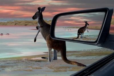 Kangaroo_Sea_Breezes.