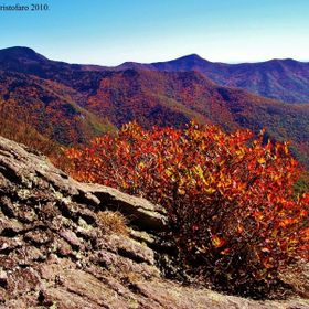This burning bush was captured during a group hike off the Blue Ridge Parkway in the autumn on 2010. It was published in the first inaugural issu...