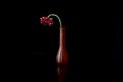 Fire Flower Of The Dark