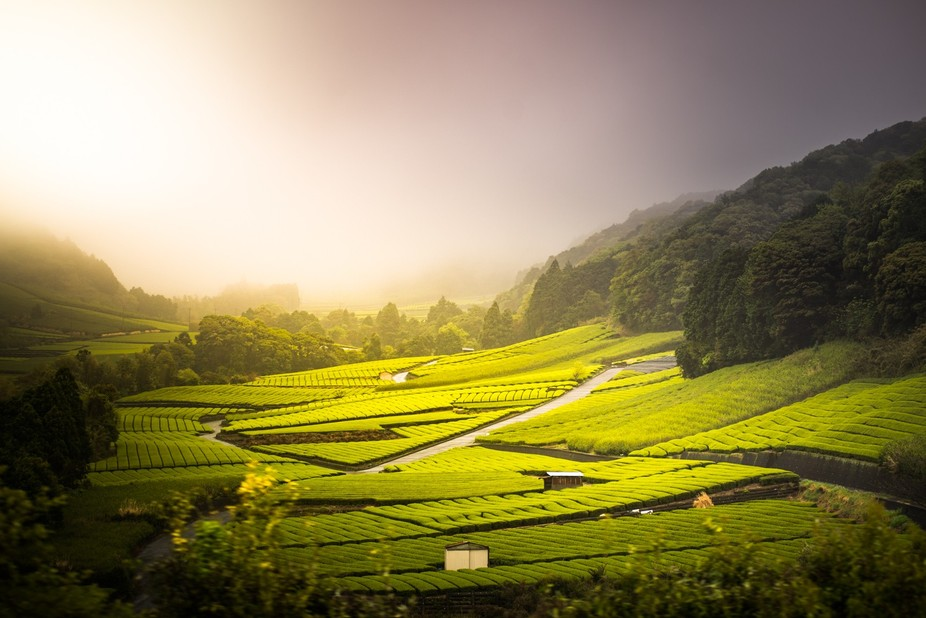 Taken in Shizuoka, Japan, which is famous for it's green tea.