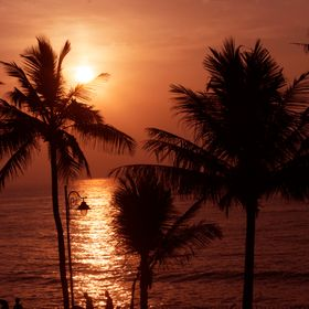 Sunrise behind the coconut trees.