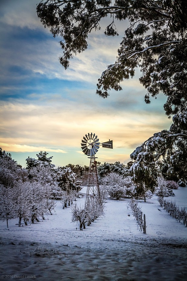 Orange Botanic Gardens by dlevick - Windmills Photo Contest