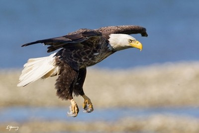 Eagle Landing; Chincoteague, Va
