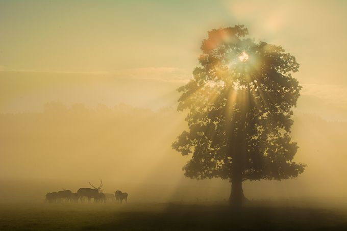 Deer In The Mist by SargeNI - Silhouettes Of Trees Photo Contest