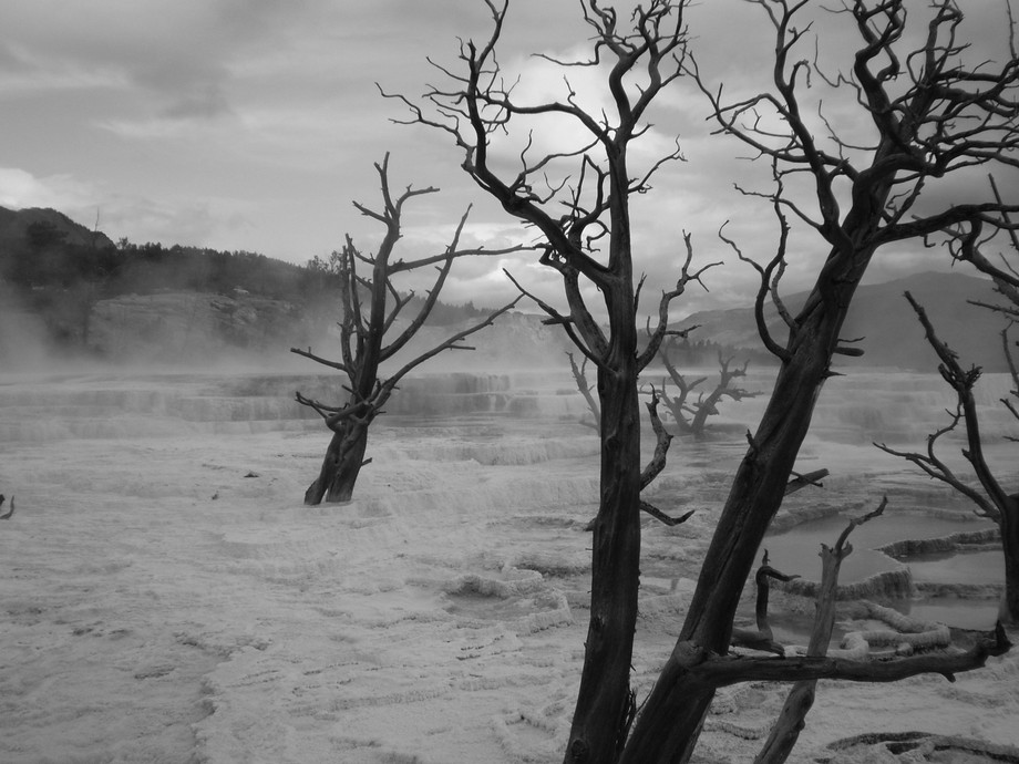 Mammoth Hot Springs, Yellowstone. Black and White