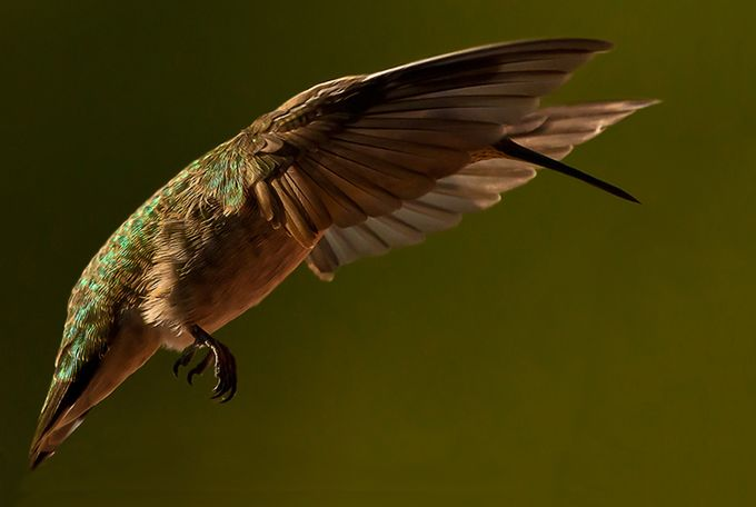 6 (3) by delhunter - Hummingbirds Photo Contest