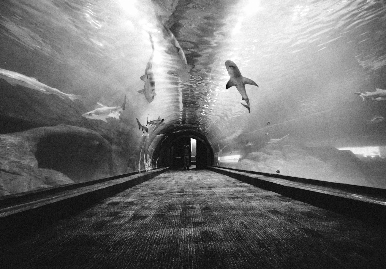 86 Incredible Photos That Will Make You Look At Tunnels In A Different Way