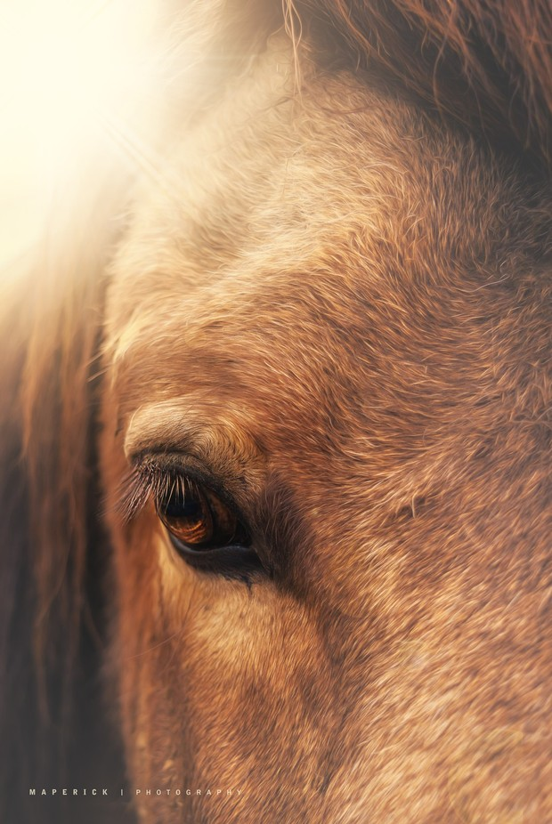 the equine eye by maperick - Fill The Frame Photo Contest
