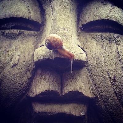 #buddha #snail